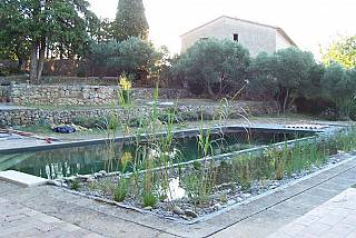 piscines-naturelles/renovation/lorgues-1/couleur-nature-piscine-grande-piscine-naturelle.jpg