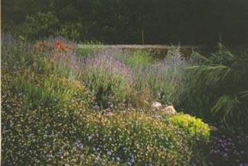quelles plantes faut il choisir pour un jardin en m diterran e. Black Bedroom Furniture Sets. Home Design Ideas