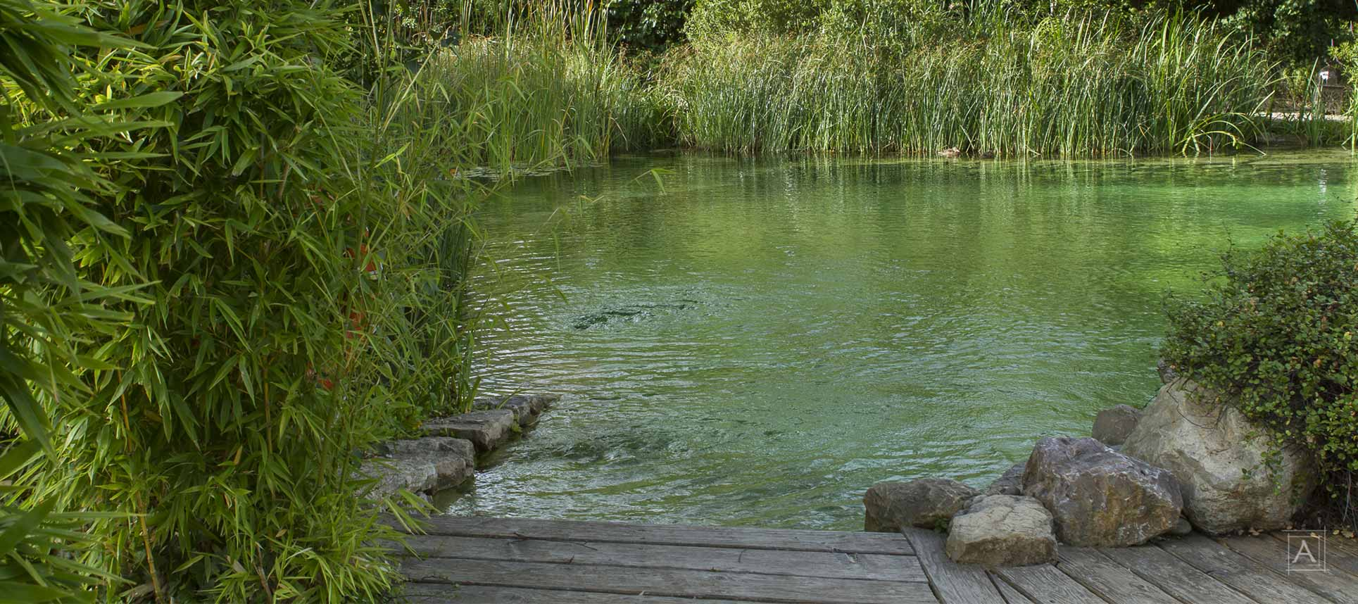 piscine-naturelle-terrasse-bois-couleur-nature